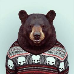 Foto di MR Bear