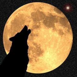 Foto di Werewolf2